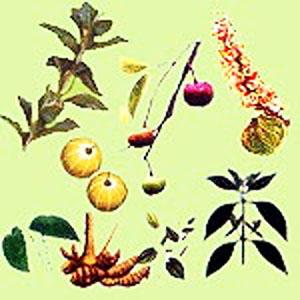 henné aux plantes